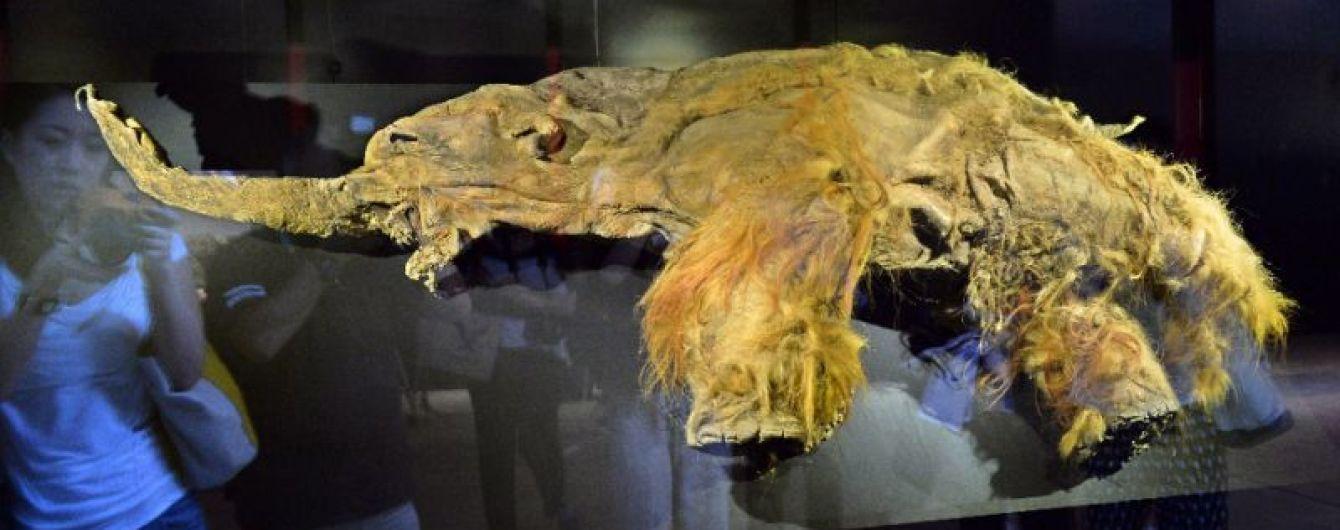 Японські вчені оживили відмерлі клітини мамонта