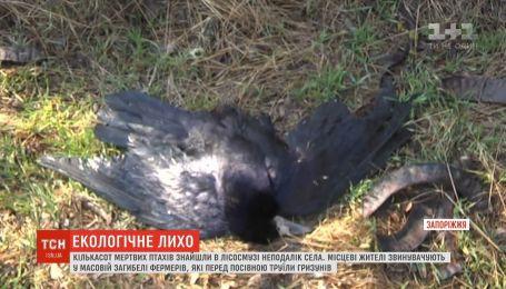 Екологічне лихо на Запоріжжі: у лісосмузі знайшли кількасот мертвих птахів