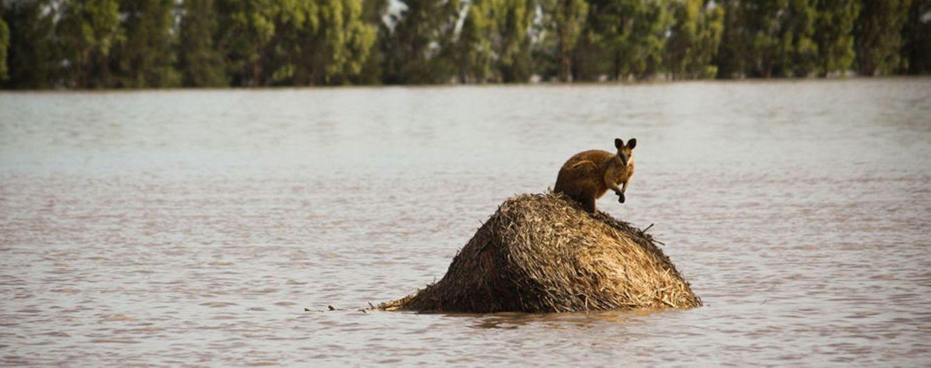 Невиданная катастрофа: австралийский штат покрылся трупами скота – экономика страны под угрозой