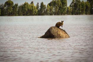 В Австралии уже через несколько десятков лет совсем исчезнет зима - исследователи