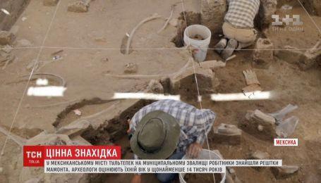 На мексиканской свалке нашли останки мамонта