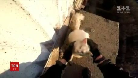 В Кривом Роге мужчина спас кота, который умирал от голода на козырьке