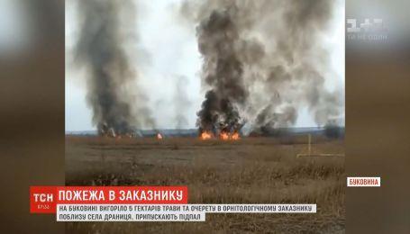 На Буковине выгорело около 5 гектаров камыша и травы в орнитологическом заказнике