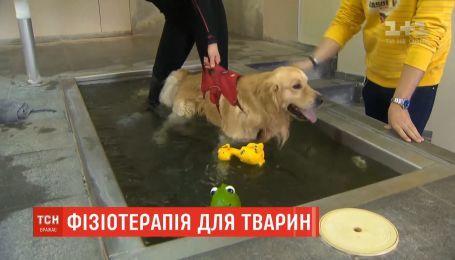 Физиотерапия для собак набирает популярность в Бельгии