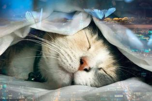Коньячок для лучших сновидений и гаджет перед сном. Пройди тест-проверку своего сна