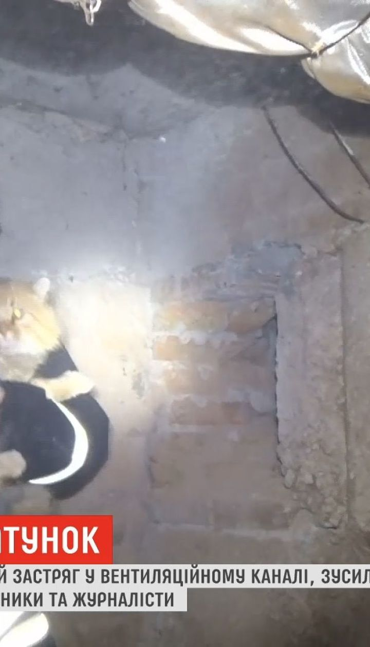 В Кропивницком спасли кота, который 12 суток провел в бетонной ловушке