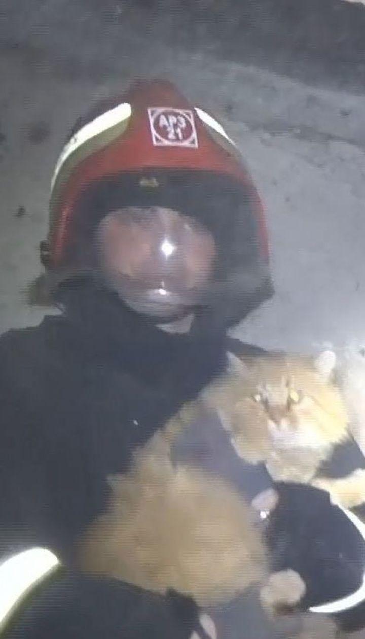 У Кропивницькому врятували кота, який 12 діб провів у бетонній пастці