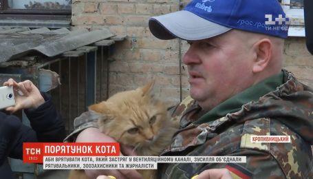 У Кропивницькому врятували кота, який застряг у вентиляції