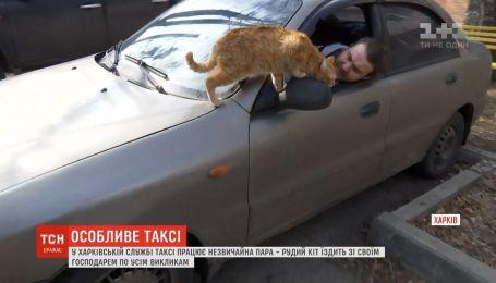 Кот-таксист работает в Харькове со своим хозяином