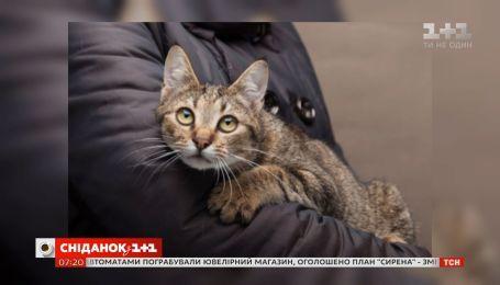 Кіт-емігрант: як українському коту вдалося знайти дім за кордоном та кардинально змінити своє життя