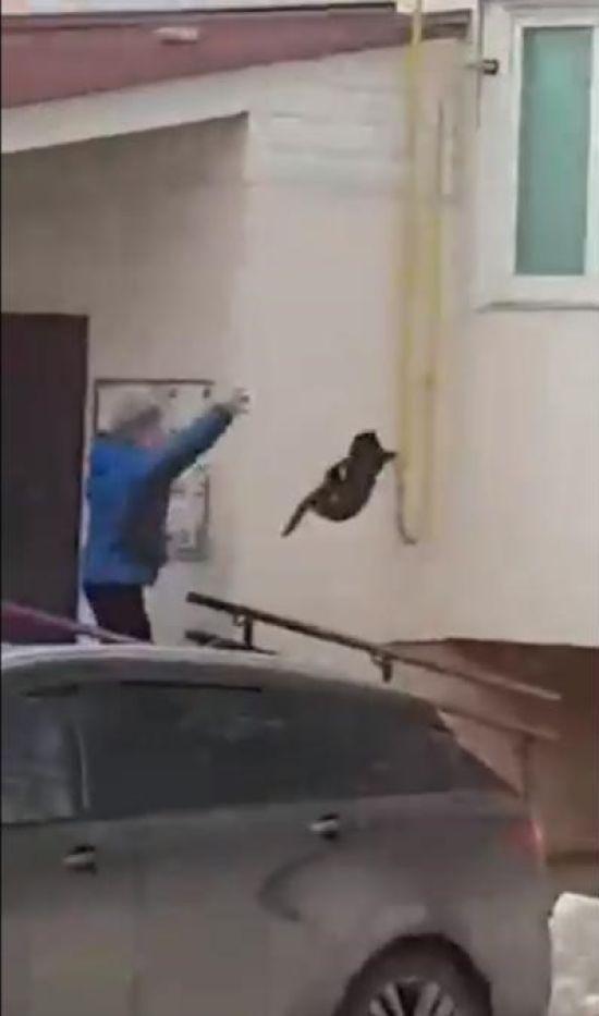 У російській Башкирії зняли на відео жінку, яка жбурляє кота у лося, щоб прогнати його