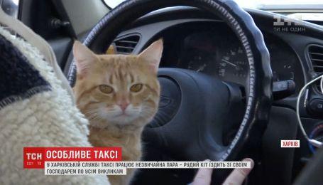 В Харьковской службе такси работает рыжий котик вместе с хозяином