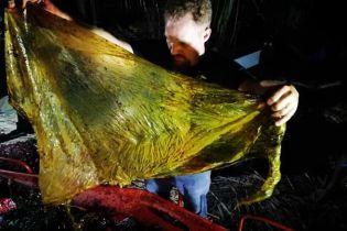 На Филиппинах в желудке мертвого кита нашли 40 кг пластика