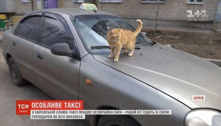 """В Харьковской службе такси рыжий кот """"возит"""" пассажиров"""