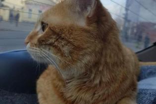 Не работает без завтрака и предвещает неудачи: как проходят трудовые будни кота-таксиста
