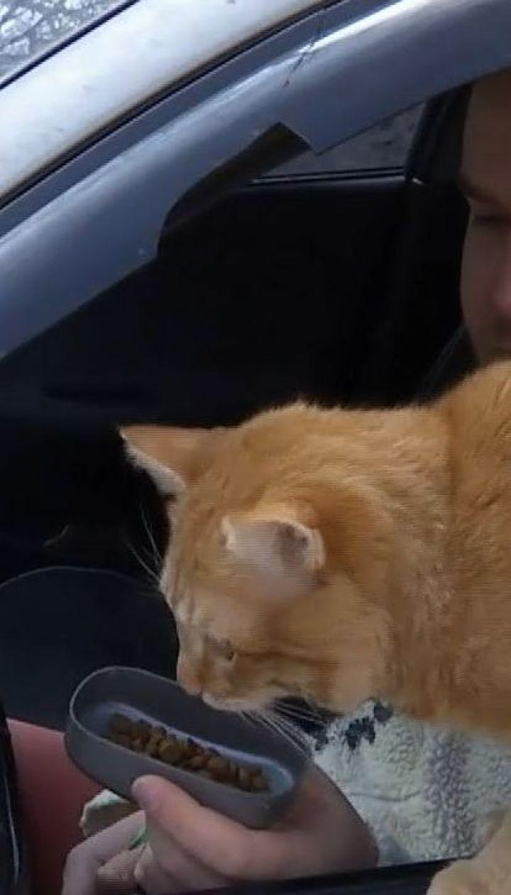 Не працює без сніданку і віщує невдачі: як минають трудові будні кота-таксиста