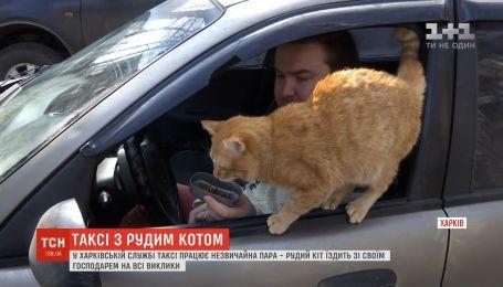 Не работает без завтрака и предвещает неудачу: как проходят трудовые будни кота-таксиста