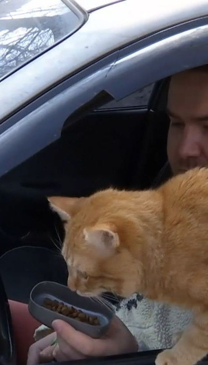 полноценного кот такси картинки многом благодаря