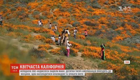 Поля и холмы неподалеку от Лос-Анджелеса стали оранжевыми из-за цветения мака