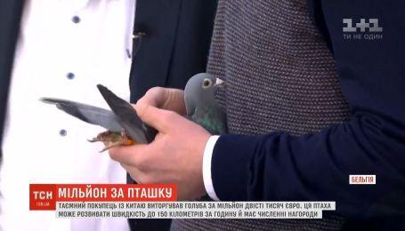 Таємний покупець із Китаю віддав за голуба більше мільйона євро