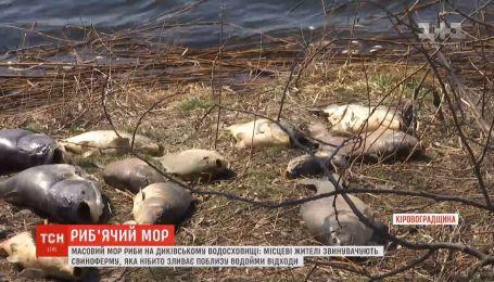 Массовый мор рыбы в Кировоградской области: местные обвиняют свиноферму вблизи