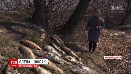 Десятки тонн рыбы вымерли в водохранилище в Кировоградской области