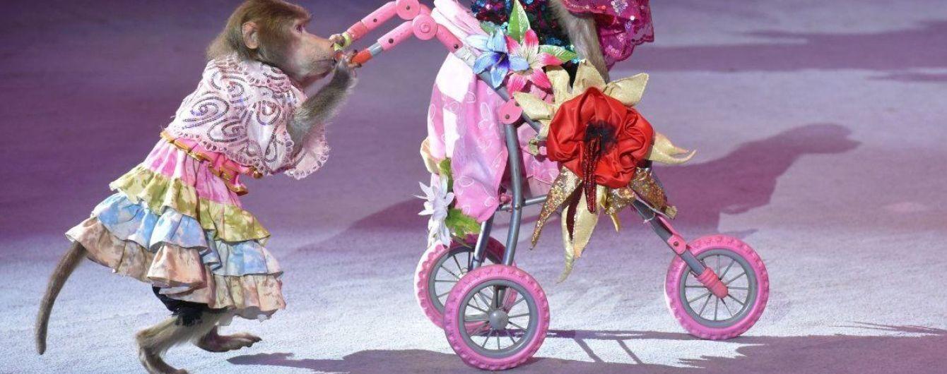 В 2020 году из государственных цирков исчезнут представления с животными - Бородянский