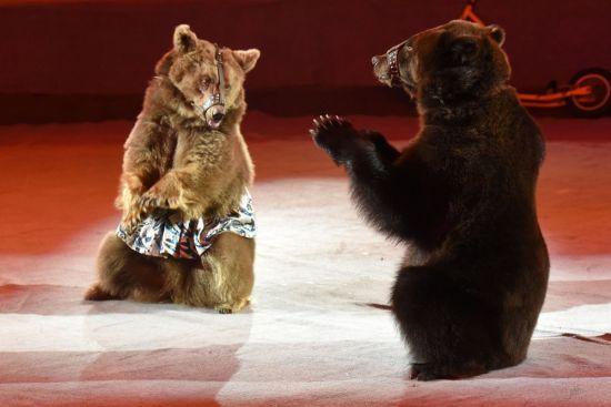 У Києві остаточно заборонили цирки-шапіто з тваринами