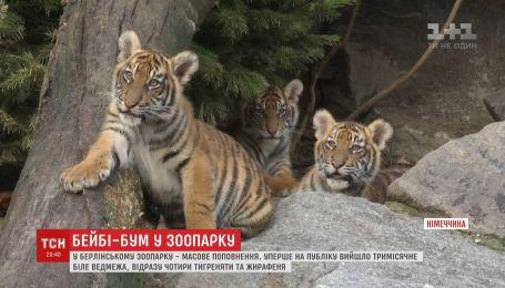 У зоопарку Берліна - масове поповнення одразу в кількох тварин