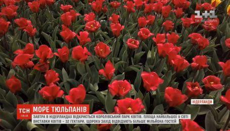 Королевский парк цветов в Нидерландах открывает новый сезон