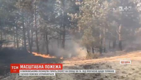 На Одещині горить 50 гектарів очерету, гасити пожежу допомагає авіація