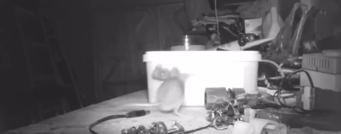 Британский пенсионер снял мышь, которая каждую ночь убирала его сарай