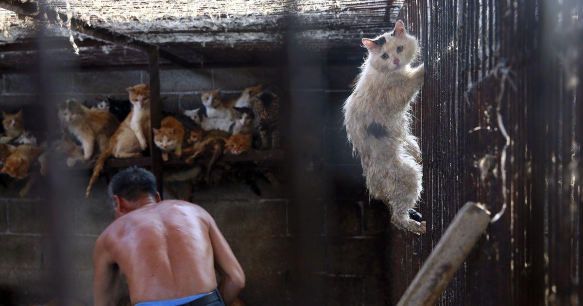 Правительство США ради сомнительного эксперимента превращает кошек в каннибалов – скандальное расследование