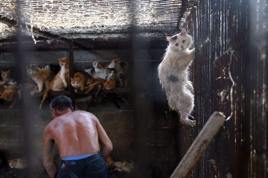 Уряд США заради сумнівного експерименту перетворює котів на канібалів – скандальне розслідування зоозахисників