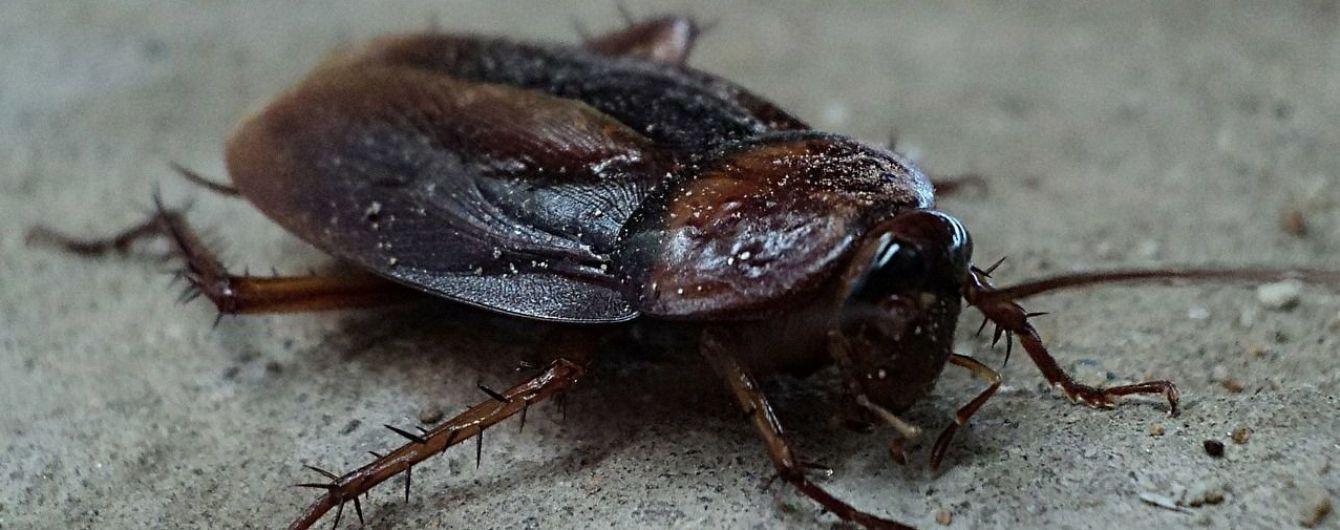 Американец хотел убить таракана, но случайно выстрелил в собственную ногу