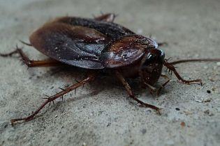 Ужас для соседей: в Запорожье квартиру превратили в ферму по выращиванию тараканов