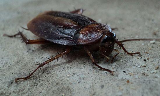 Американець хотів убити таргана, але випадково вистрелив у власну ногу