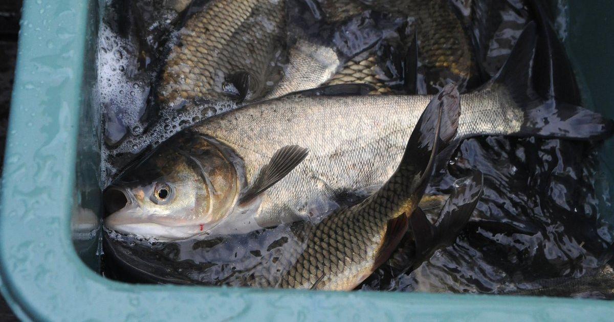 Украина масштабно экспортирует рыбу за границу