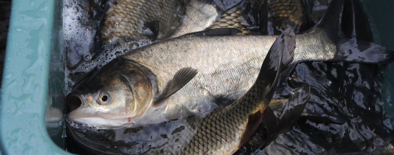 Полицейский наладил сбыт украинцам опасной рыбы из Чернобыльской зоны в промышленных масштабах