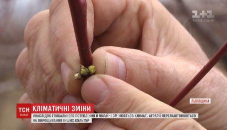 Аграрії перелаштовуються на вирощування непритаманних для України культур
