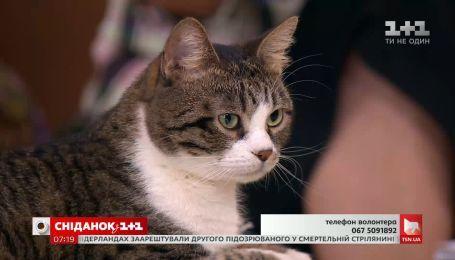 Очень спокойная и ласковая кошка Марго ищет семью