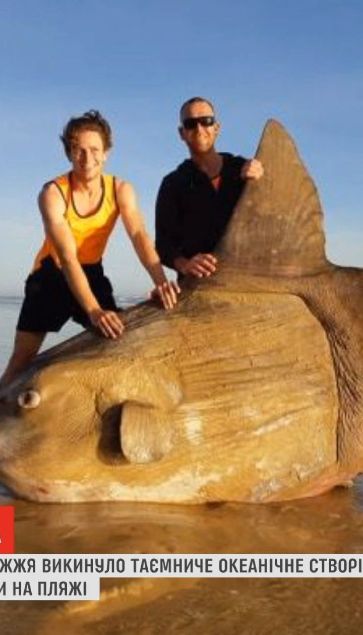 На австралийское побережье выбросило необычное океаническое существо