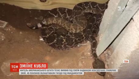 У Техасі чоловік виявив під своїм будинком отруйних гримучих змій