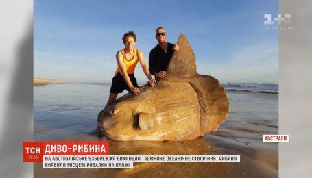 На австралійське узбережжя викинуло незвичайне океанічне створіння