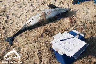 В море вблизи аннексированной Евпатории погибли сразу 16 дельфинов