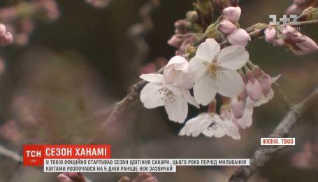 У Токіо офіційно стартував сезон цвітіння сакури