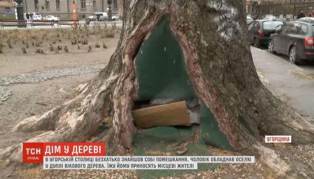В венгерской столице бездомный устроил себе жилье в дупле