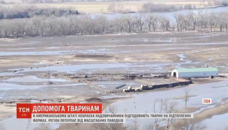 В штате Небраска чрезвычайники с вертолетов подкармливают животных на затопленных фермах