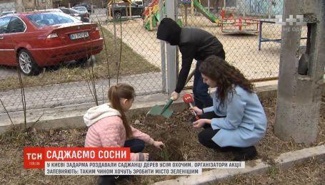 У Києві задарма роздавали саджанці сосен усім охочим