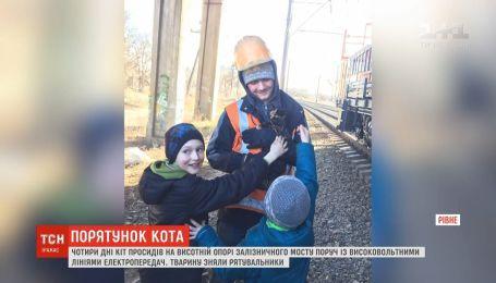 Кота, который 4 дня просидел на высотной опоре моста в Ровно, спасли неравнодушные